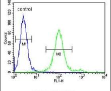 GOLT1A Antibody (PA5-25522)