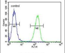 GSTO2 Antibody (PA5-25736)