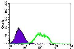 GUCY1A3 Antibody (MA5-17086)