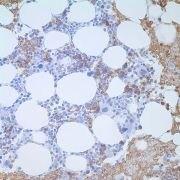 CD235a Antibody (MA1-35460)