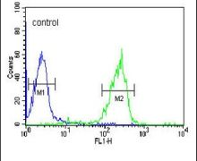 Granzyme B Antibody (PA5-13518)
