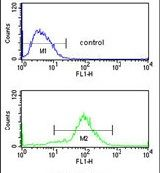 MOB2 Antibody (PA5-26359)