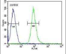 HCK Antibody (PA5-25989)