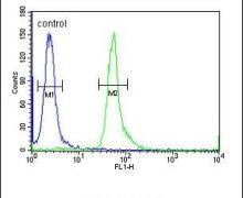 HEMK1 Antibody (PA5-24489)