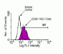 CD30 Antibody (HMCD3001)