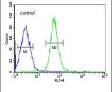 HMGA2 Antibody (PA5-25276)