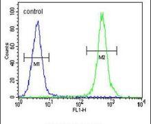 Haptoglobin Antibody (PA5-24174)