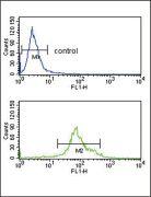 HSD17B3 Antibody (PA5-26524)