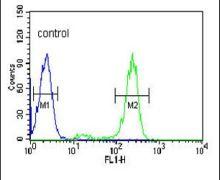 HSP90 beta Antibody (PA5-26001)