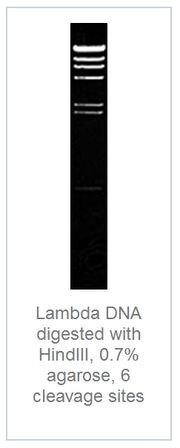 DNA digest