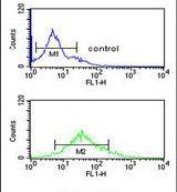 Di-Methyl-Histone H3 (Lys9) Antibody (PA5-24987)
