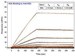 Human Serum Albumin Antibody (MIH3005)
