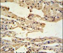 IFITM2 Antibody (PA5-24701)