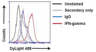 IFN gamma Antibody (M701)