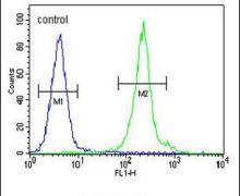 IL-12 p40 Antibody (PA5-23965)