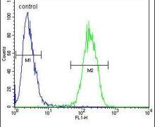 IL-17F Antibody (PA5-24441)