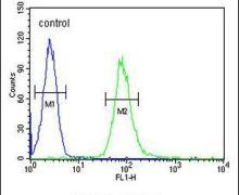 IL2RG Antibody (PA5-26461)
