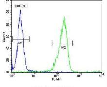 IL-31 Antibody (PA5-26394)