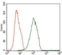 ILK Antibody (MA5-17099)