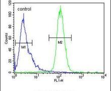 INTS10 Antibody (PA5-26920)