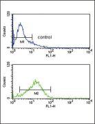 IRF8 Antibody (PA5-12441)