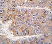 IRS2 Antibody (PA5-14897)
