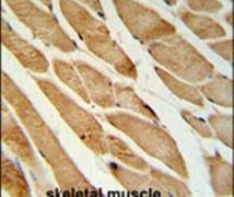 ISLR Antibody (PA5-24804)