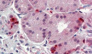 CD49f Antibody (PA5-32884)