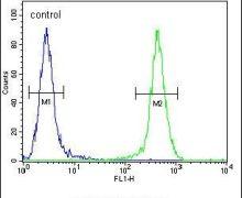 JOSD2 Antibody (PA5-24098)