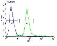 KCTD12 Antibody (PA5-26281)