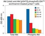 Akt [pS473] phosphoELISA™.