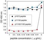 IR [pYpY1162⁄63] phosphoELISA™.