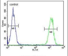 KIR2DL2 Antibody (PA5-25666)