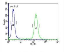KLHL9 Antibody (PA5-25097)
