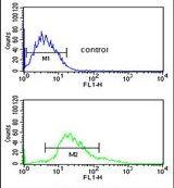 Cytokeratin 1 Antibody (PA5-26699)