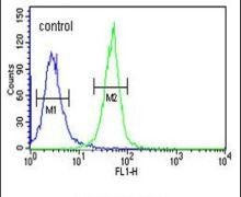 KRTAP1-1 Antibody (PA5-25474)