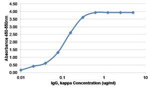 Human Kappa Light Chain Secondary Antibody (MA5-12114)