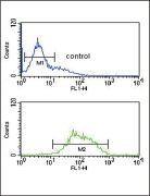 LCAT Antibody (PA5-26867)