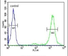 LMAN1L Antibody (PA5-25618)