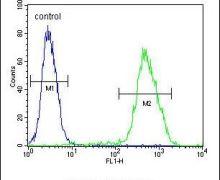 LMO4 Antibody (PA5-24248)
