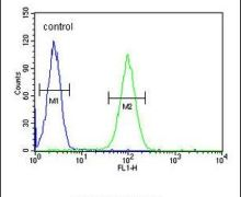LNPEP Antibody (PA5-23777)