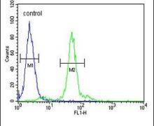LOX Antibody (PA5-26135)