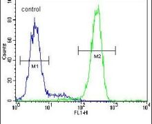 LRRC40 Antibody (PA5-24502)