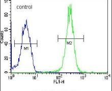 LRRC57 Antibody (PA5-24038)