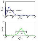 LSP1 Antibody (PA5-25357)