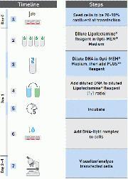 Lipofectamine® Workflow