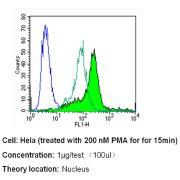 Phospho-CREB/ATF1 (Ser133, Ser63) Antibody (MA1-114)