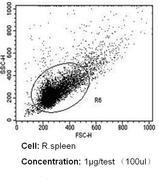 CD18 Antibody (MA1817)