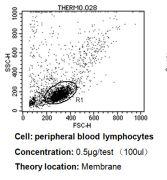 CD24 Antibody (MA5-11828)