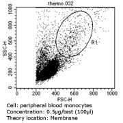 CD36 Antibody (MA5-14112)